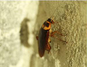 Pest Control Guide