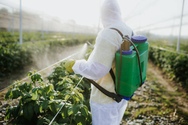 Pest-control-plantation