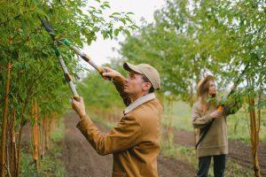 best-trees-treatment