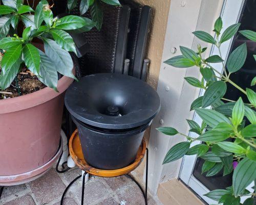 exterior pests control service