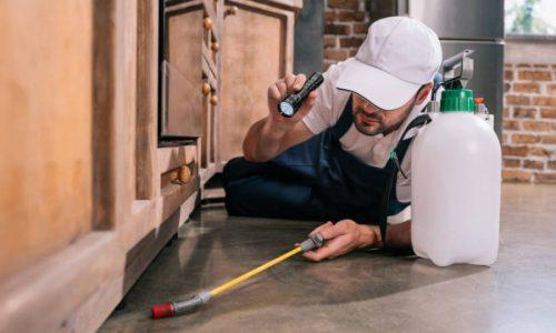 interior-pest-control-services